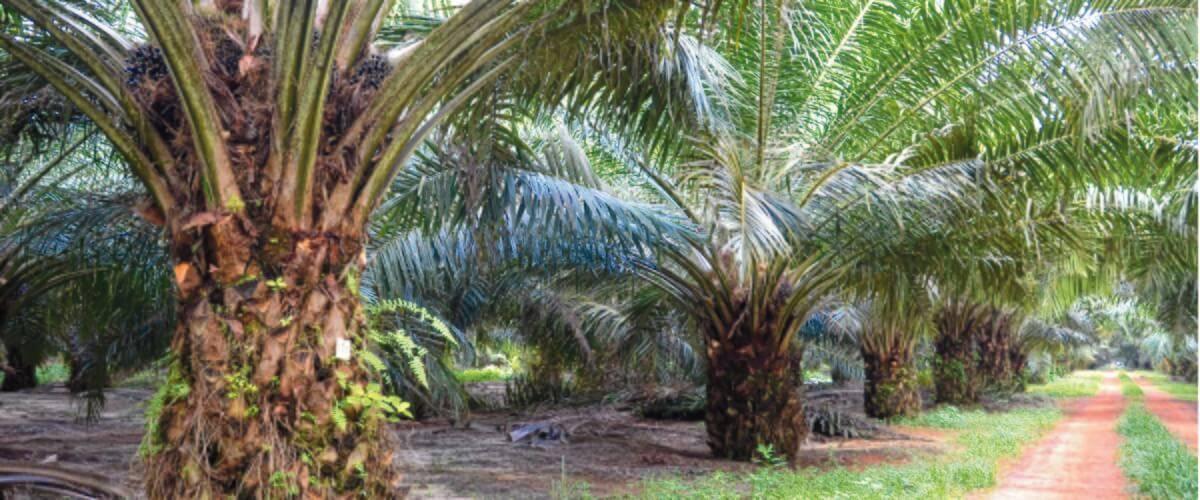 Plantation Management/ Plantation Owner