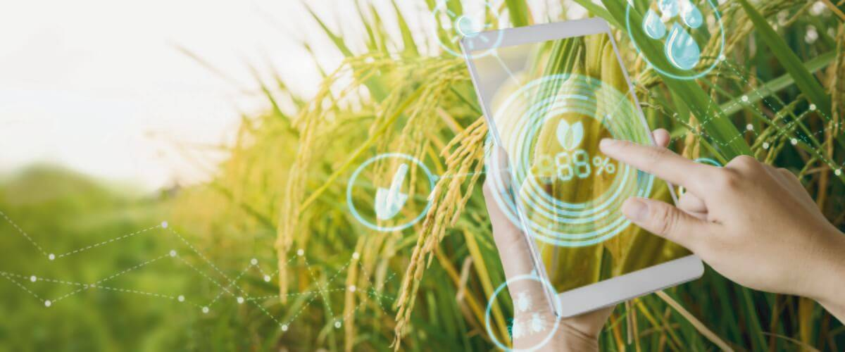 Agricultural Technology / IoT Solutions